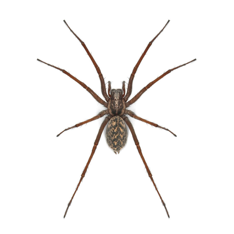 What do you know about spiders? (Fotolia.com)
