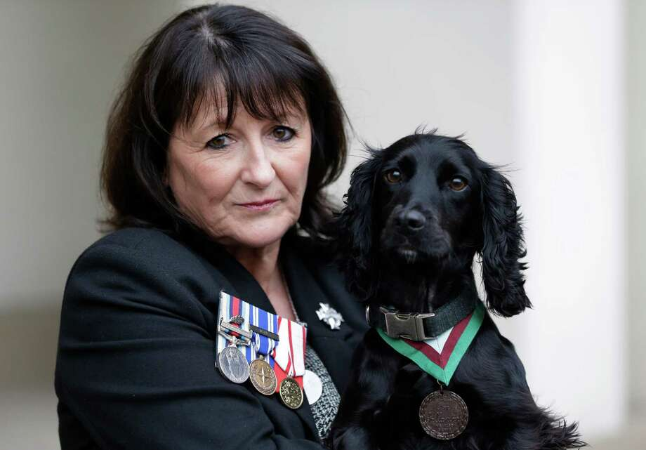 Jane Duffy, mother of British Army Lance Corporal Liam Tasker who was killed during the conflict in Afghanistan, wears her son's medals as she holds Grace, a search dog with the British army, wearing a Dickin Medal, Britain's highest award for bravery by animals that was posthumously awarded to Theo, a bomb-sniffing army dog, following a special ceremony held at Wellington Barracks, in central London, Thursday, Oct. 25, 2012. Theo, a Springer Spaniel, worked alongside Lance Cpl. Liam Tasker, searching out roadside bombs in the Taliban stronghold of Helmand Province.  Tasker was killed in a firefight with insurgents in March 2011, and Theo suffered a fatal seizure hours later. It is the highest award any animal can receive while serving in military conflict. Photo: Lefteris Pitarakis, Associated Press / AP
