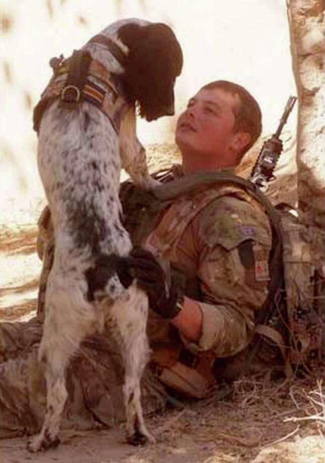 This is a undated Ministry of Defence handout photo made available on Thursday Oct. 25, 2012 of Lance Corporal Liam Tasker and his Springer spaniel mix Theo.   Theo the bomb-sniffing army dog who died in Afghanistan on the day his handler was killed has been honored with Britain's highest award for animal bravery. Springer spaniel mix Theo was posthumously awarded the Dickin Medal on Thursday at a ceremony in London. Photo: Associated Press / MOD
