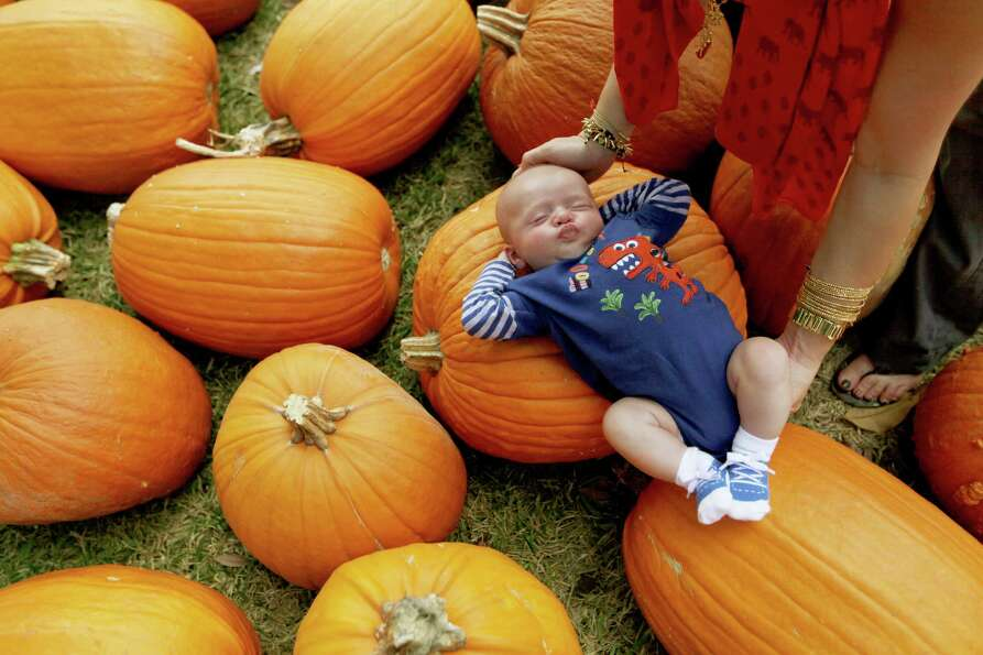 Lindsay Haywood places son Tyler Haywood, 7 weeks old, on a flat pumpkin for a photo while he is sle