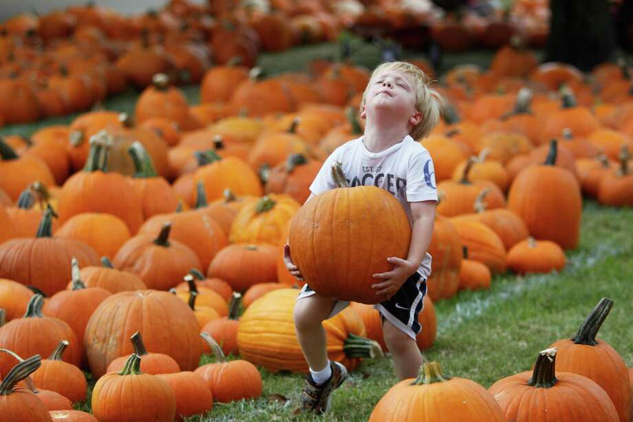 Cole Lacy, 4, carries a pumpkin he picked out of 3,000 pumpkins on the patch at St. Luke's United Methodist Church Pumpkin Patch on Wednesday, Oct. 10, 2012, in Houston. Photo: Mayra Beltran, Houston Chronicle / © 2012 Houston Chronicle