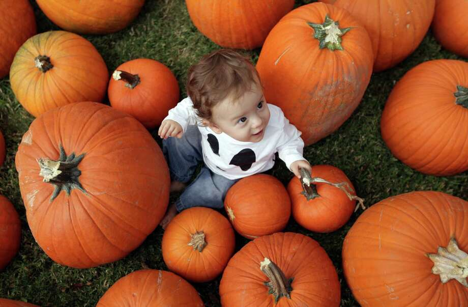 Joshua Lacy, 11-months, is surrounded by over sized pumpkins at St. Luke's United Methodist Church Pumpkin Patch fundraiser on Wednesday, Oct. 10, 2012, in Houston. Photo: Mayra Beltran, Houston Chronicle / © 2012 Houston Chronicle