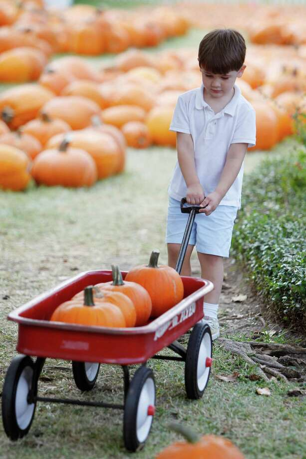 James Gillett, 3, pulls his pumpkins him and his mother picked out at St. Luke's United Methodist Church Pumpkin Patch fundraiser on Wednesday, Oct. 10, 2012, in Houston. Photo: Mayra Beltran, Houston Chronicle / © 2012 Houston Chronicle