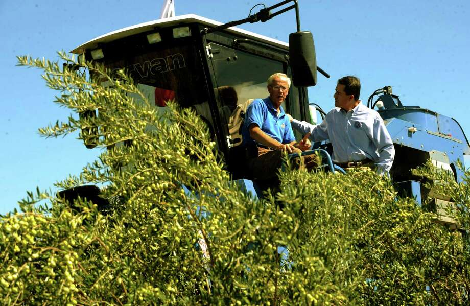 Jim Henry of the Texas Olive Ranch, left, speaks with Todd Staples, Texas commissioner of agriculture, atop an olive harvesting machine in an olive grove during Olive Oil Field day to promote the industry on Sept. 14, 2010. BILLY CALZADA / gcalzada@express-news.net Photo: BILLY CALZADA, SAN ANTONIO EXPRESS-NEWS / gcalzada@express-news.net