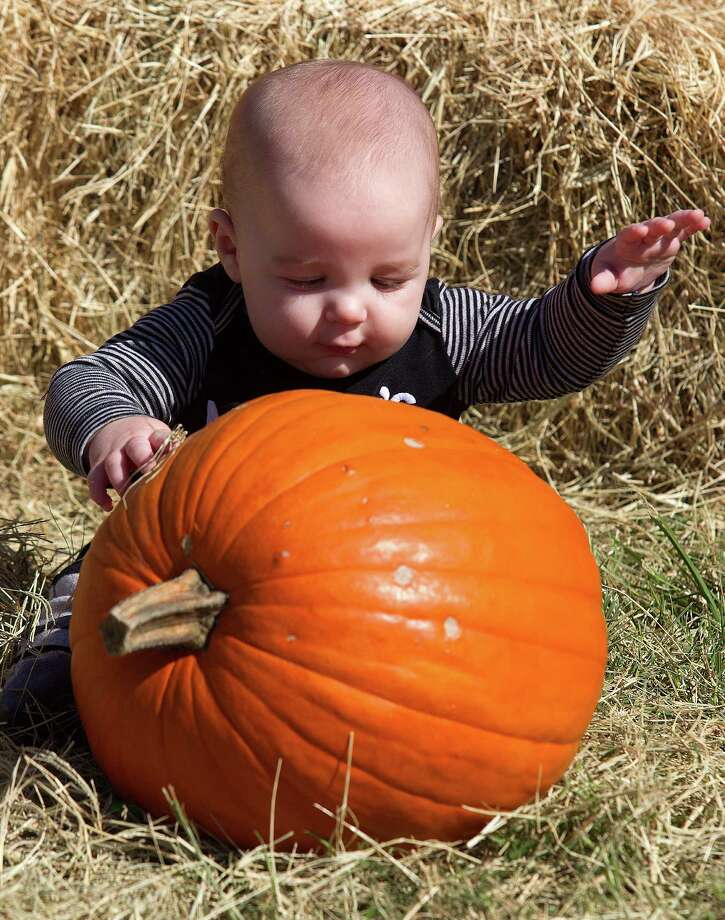 Five-month-old Riley Reddoch plays with a pumpkin during the fourth annual Howl-O-Ween Fest 2012 at Bridgeland's Oak Meadow Park in Cypress on Saturday, Oct. 27, 2012, in Houston. Photo: J. Patric Schneider, For The Chronicle / © 2012 Houston Chronicle