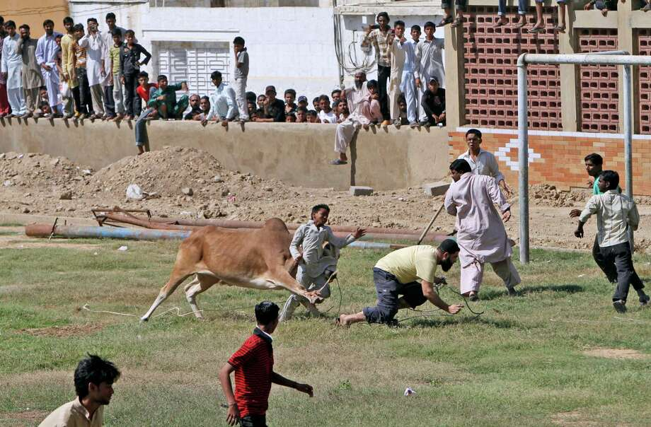 "A bull attacks a boy after running away from Pakistani butchers trying to slaughter it, on the first day of the Muslim holiday of Eid al-Adha, or ""Feast of Sacrifice"", in Karachi, Pakistan, Saturday, Oct. 27, 2012. The boy was slightly injured according to the photographer. (AP Photo/Shakil Adil) Photo: Shakil Adil, STR / AP"
