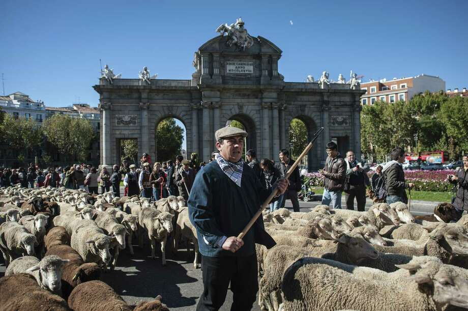 Modern farming practices are however increasingly confining animals to barns, because shepherding is costly, according to the Ministry of Agriculture, which has been promoting the colorful annual Transhumance Fiesta in Madrid since 1994. Photo: DANI POZO, AFP/Getty Images / AFP