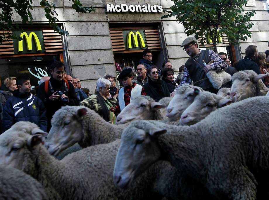 The movement is called transhumance and in Spain up until recently involved close to a million animals a year, mostly sheep and cattle. Photo: Andres Kudacki, Associated Press / AP