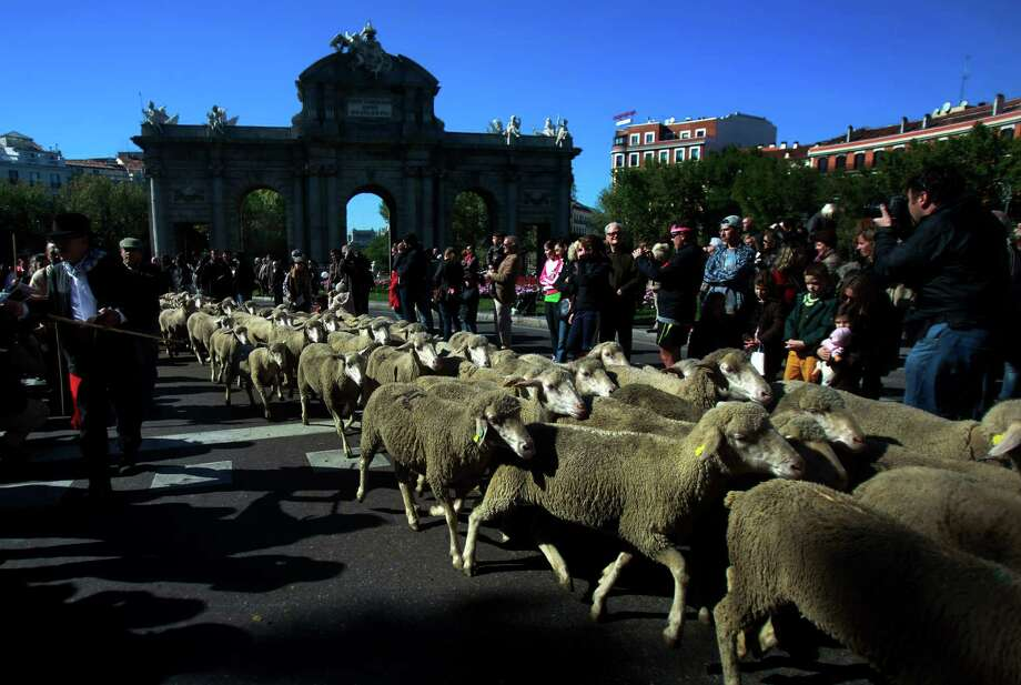 The right to use droving routes that wind across land that was open fields and woodland before Madrid grew from a rural hamlet to the great metropolis it is today has existed since at least 1273. Photo: Andres Kudacki, Associated Press / AP