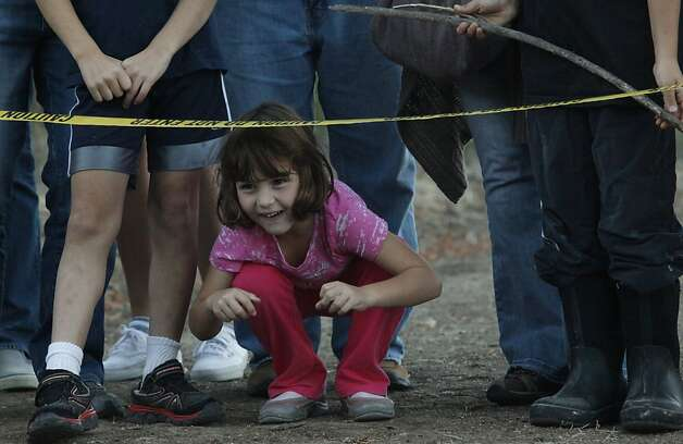 Isabel Zabronsks, 5, laughs as the grey foxes she found months ago run for freedom on the Ritchie Loop Trail of the Upper San Leandro Watershed in Moraga Calif. on Sunday, Oct. 28, 2012. Photo: Alex Washburn, Special To The Chronicle