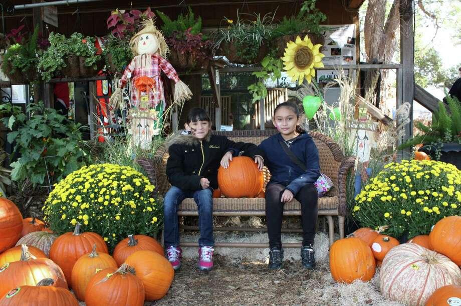 Milberger's Halloween Photos – Saturday, October 26, 2012 Photo: Express-News