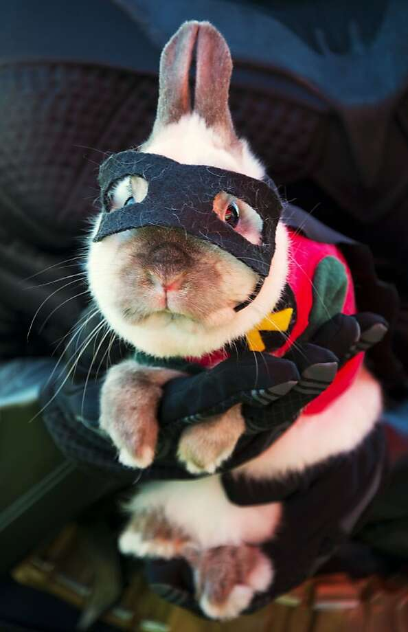 To the Bat Hutch, Hare Wonder:With Robin long gone, an aging Batman relies on a new sidekick to fight crime in Long Beach, Calif. Photo: Robyn Beck, AFP/Getty Images
