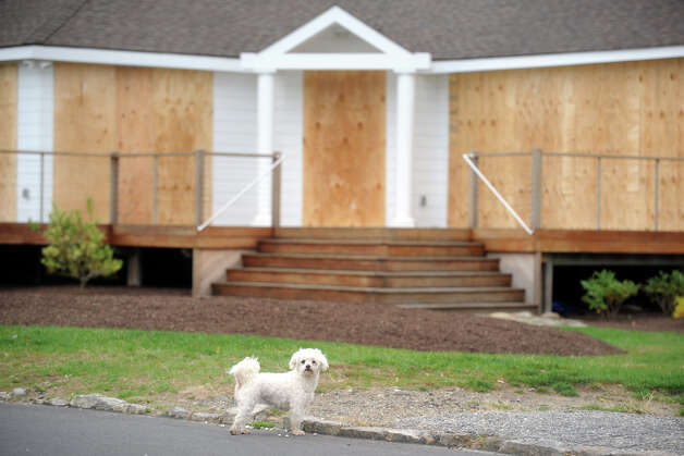 A dog stands in front of a boarded up house in the Lordship section of Stratford, Conn. Oct. 29th, 2012. Photo: Ned Gerard
