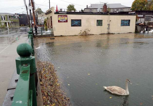 A swan swims in the elevated water of the Byram River during Hurricane Sandy in Byram, Monday afternoon, Oct. 29, 2012. In the background is Sam's Bar & Grill in Port Chester, N.Y. Photo: Bob Luckey / Greenwich Time