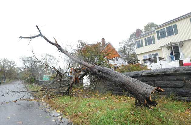 A knocked-down tree on Strickland Road during Hurricane Sandy, Monday afternoon, Oct. 29, 2012. Photo: Bob Luckey / Greenwich Time