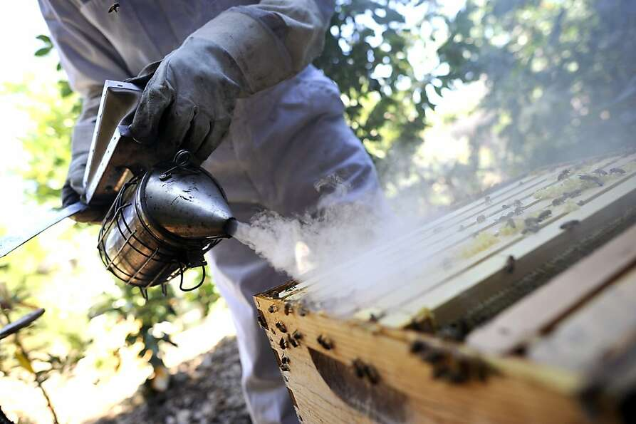 Russel Shaffer, president of the Alameda County Beekeepers Association, uses a smoker as he works