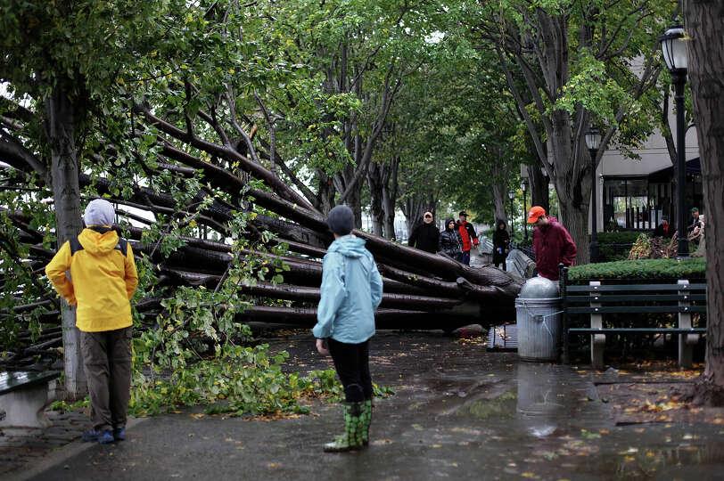 People pass a fallen tree October 30, 2012 in the Battery Park neighborhood of Manhattan, New York.