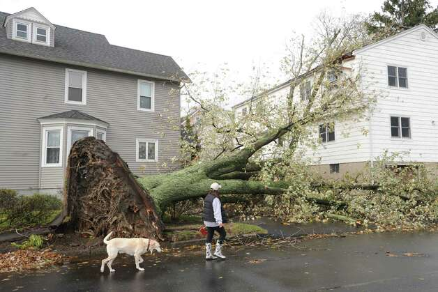 An uprooted tree on William Street West during the aftermath of Hurricane Sandy in Byram, Tuesday morning, Oct. 30, 2012. Photo: Bob Luckey / Greenwich Time