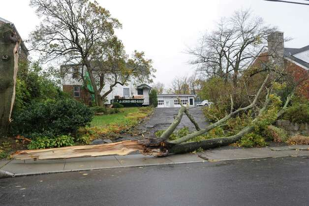 A down-tree blocks a driveway on Holly Hill Lane during the aftermath of Hurricane Sandy in Byram, Tuesday morning, Oct. 30, 2012. Photo: Bob Luckey / Greenwich Time