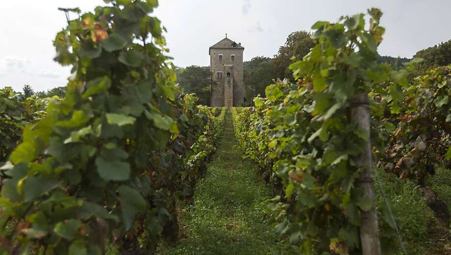 French vineyards like those at Gevrey-Chambertin castle in Burgundy could be hit hard by a recent drought, cold and wet weather, hailstorms, and a heat wave. Photo: Laurent Cipriani, Associated Press