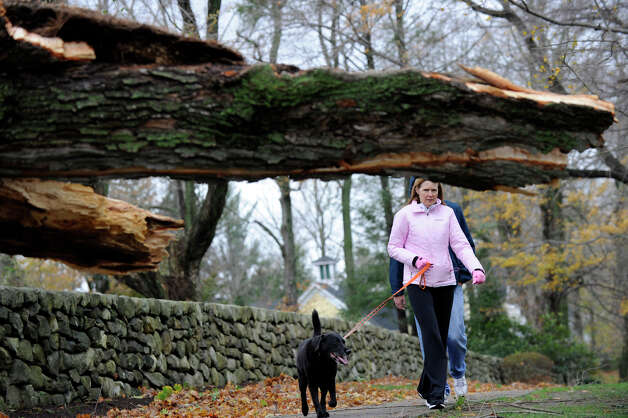 A huge tree blocks a sidewalk on Main street in Ridgefield, Conn. Tuesday, Oct. 30, 2012, where Rosemary Seagriff is walking her dog. Much of Ridgefield is out of powere due to Hurricane Sandy. Photo: Carol Kaliff