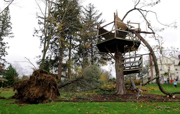 A three-story tree house and the tree that held it up, was toppled at the Haynes home in Ridgefield, Conn. during Hurricane Sandy, Tuesday, Oct. 30, 2012. Photo: Carol Kaliff