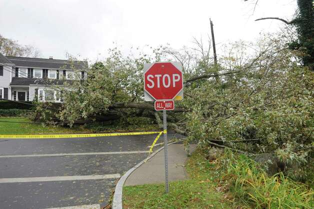Bill Evans, meteorologist, had a large tree at Tomac Avenue in Old Greenwich, Conn. during the windy storm from Hurricane Sandy on Tuesday, Oct. 30. 2012. Photo: Helen Neafsey, Contributed Photo / Greenwich