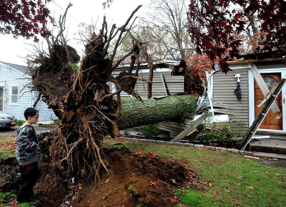 David Baldelli Jr. 8, looks at the tree that fell on his Danbury, Conn. home during Hurricane Sandy Tuesday, Oct. 30, 2012. Photo: Michael Duffy