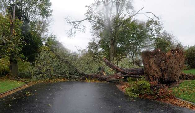A large tree lays across a street in Shippan on Tuesday, October 30, 2012. Photo: Lindsay Niegelberg