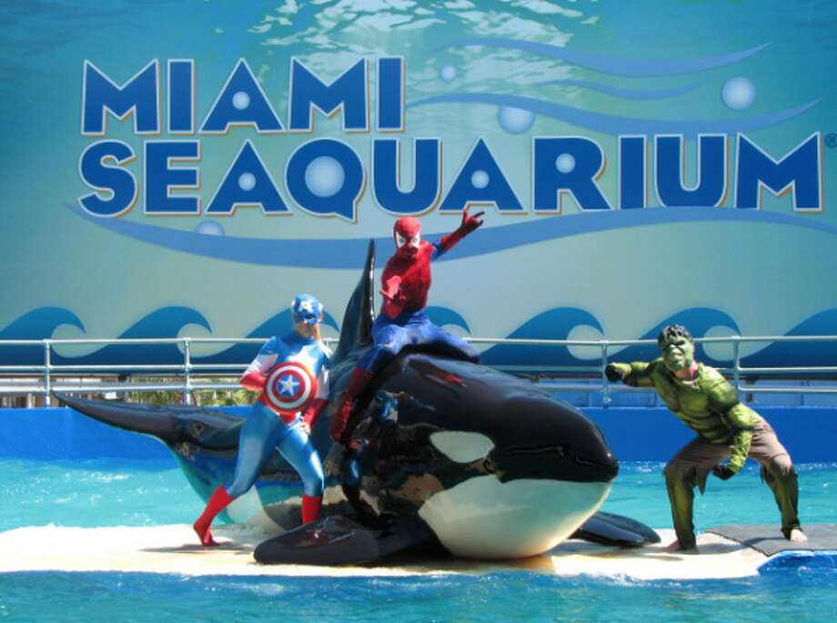 Lolita (or Tokitae) has lived in a small tank in the Miami Seaquarium for nearly five decades after being taken out of Puget Sound waters in 1970.