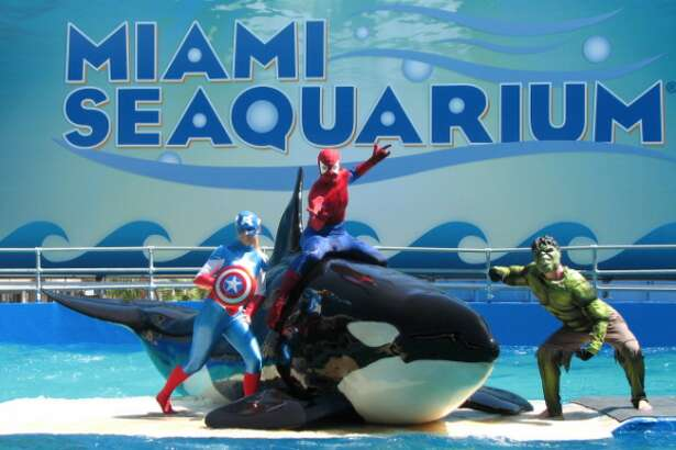 Wild-caught Southern Resident Orca Lolita's life at the Miami Seaquarium
