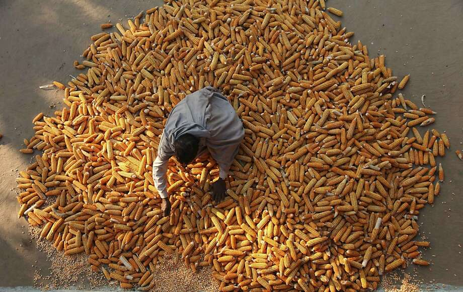 A man sorts corn for sale on the outskirts of Jammu, India, Tuesday, Oct. 30, 2012. India's central bank left its key interest rate unchanged Tuesday but trimmed the cash reserve ratio, resisting growing pressure from New Delhi to cut rates even as it slashed its growth forecast and raised its inflation projection for Asia's third-largest economy. (AP Photo/Channi Anand) Photo: Channi Anand, Associated Press