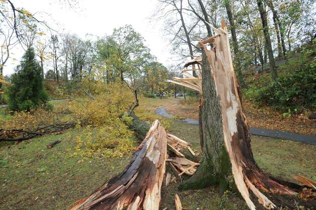 A downed-tree in Byram Park during the aftermath of Hurricane Sandy in Byram, Tuesday morning, Oct. 30, 2012. Photo: Bob Luckey / Greenwich Time
