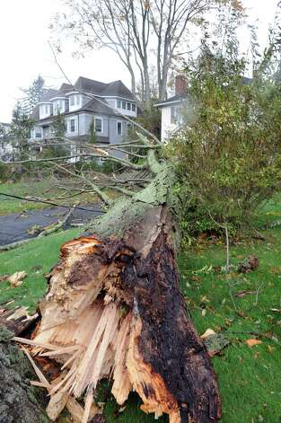 A large tree fell in a yard on Sound Beach Avenue in Old Greenwich, Conn.  during the windy storm from Hurricane Sandy onTuesday, Oct. 30. 2012. Photo: Helen Neafsey / Old Greenwich