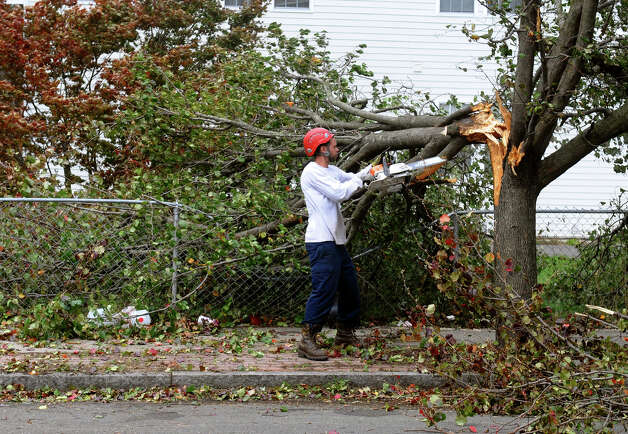 Joseph Dorso, from Northeast Horticulture Services, cuts up downed trees along Newfield Avenue in Bridgeport, Conn. on Tuesday October 30, 2012. Photo: Christian Abraham