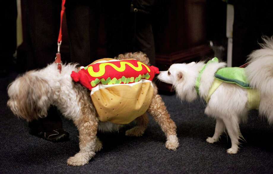 Tibetan terrier Piccadilly is dressed as a hot dog and is checked out by another dog during the CityDog Magazine inaugural Howl-at-the-Moon Muttmixer at the Woodmark Hotel in Kirkland on Tuesday, October 30th, 2012. Dozens of dogs in costume attended the event. Photo: JOSHUA TRUJILLO / SEATTLEPI.COM