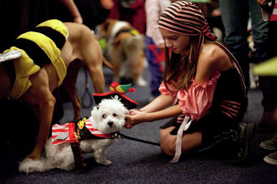 Valentina Trudeau, 9, puts a costume on her dog, Mini, during the CityDog Magazine inaugural Howl-at-the-Moon Muttmixer at the Woodmark Hotel in Kirkland on Tuesday, October 30th, 2012. Dozens of dogs in costume attended the event. Photo: JOSHUA TRUJILLO / SEATTLEPI.COM