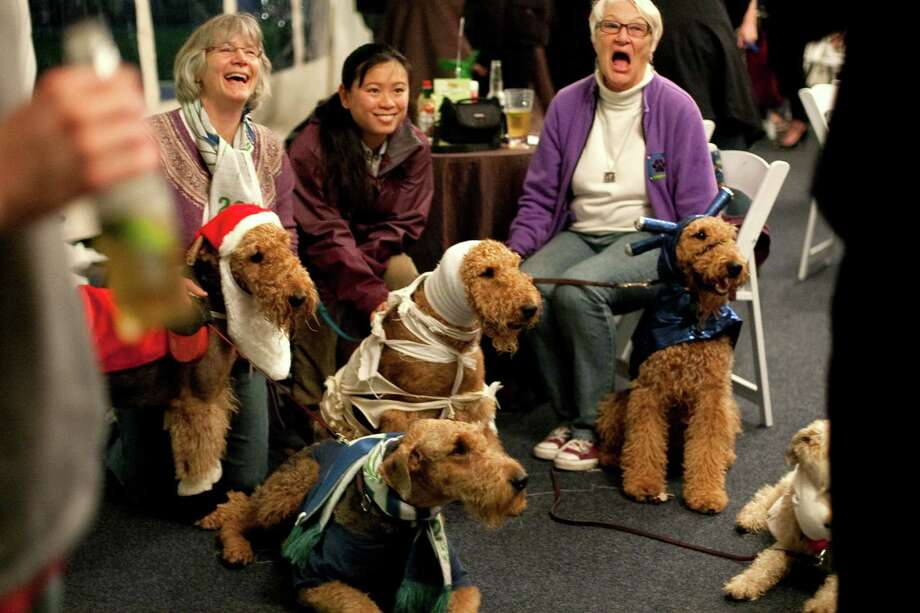 Participants sit with their airedale terriers during the CityDog Magazine inaugural Howl-at-the-Moon Muttmixer at the Woodmark Hotel in Kirkland on Tuesday, October 30th, 2012. Dozens of dogs in costume attended the event. Photo: JOSHUA TRUJILLO / SEATTLEPI.COM