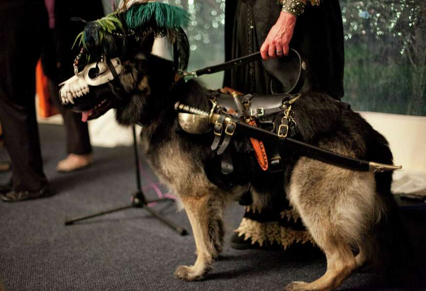 German shepherd Pirate sits next to his owner during the CityDog Magazine inaugural Howl-at-the-Moon