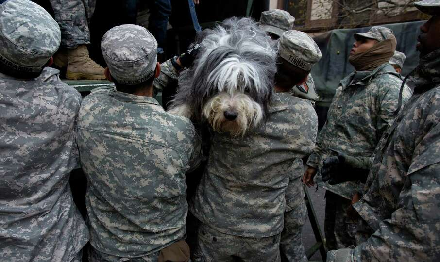 A dog named Shaggy is handed from a National Guard truck to National Guard personnel after the dog a