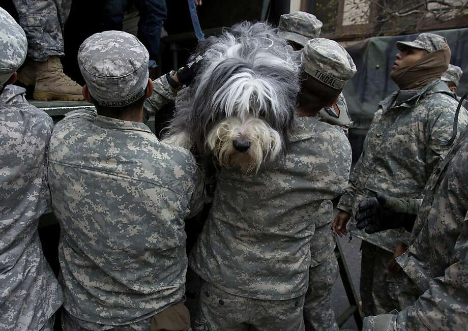 Sandy leaves Shaggy soggy:National Guardsman lift a hirsute hound named, appropriately enough, Shaggy, off a Guard truck after he and his owner got a ride from a flooded building in Hoboken, N.J. Parts of the city are still covered in standing water from superstorm Sandy. Photo: Craig Ruttle, Associated Press