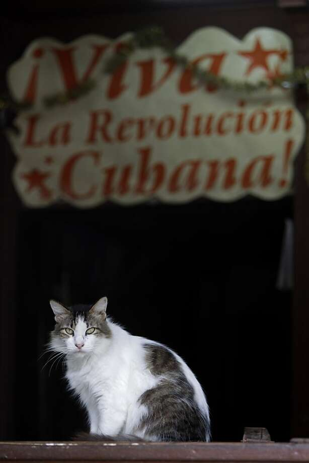 "Viva, la gato! A Cat-stro supporter rests under a grocery store sign that reads ""Long live the Cuban Revolution!"" in Havana. Photo: Franklin Reyes, Associated Press"