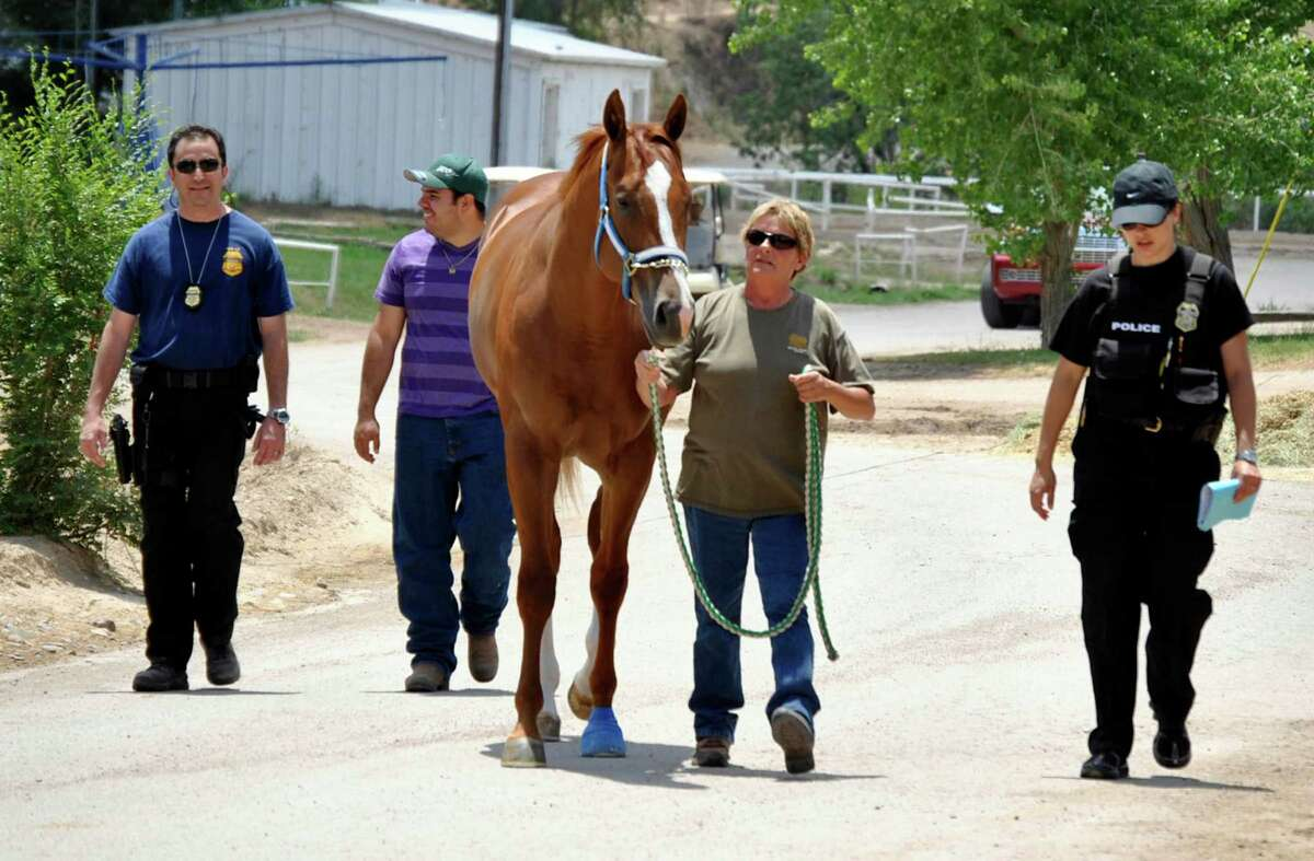 Unidentified law enforcement personnel take a horse away from the stable area at Ruidoso Downs Racetrack and Casino in Ruidoso, N.M., Tuesday morning, June 12, 2012. An indictment unsealed Tuesday accused Miguel Angel Trevino Morales, a key figure in the Zetas drug operation, of setting up a horse operation that a younger brother operated from a ranch near Lexington, Okla., south of Oklahoma City. Millions of dollars went through the operation, which bought, trained, bred and raced quarter horses throughout the southwest United States, including the famed Ruidoso Downs track in New Mexico.