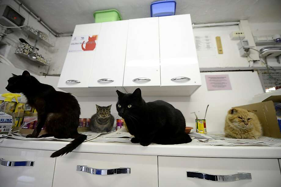 """Shrimp stir fry again tonight?The kitchen of the Roman headquarters of the """"Feline Colony of Largo Argentina"""" organization is often crowded around dinnertime. The group cares for several hundred cats who roam the Area Sacra ruins of Rome. Photo: Filippo Monteforte, AFP/Getty Images"""