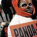 Jeanne Marie Scorseter came in full makeup with her chihuahua Tostito to the presentation at City hall as the city of San Francisco celebrated the Giants victory as World Series Champions with a parade and ceremony at Civic Center Plaza on Wednesday, October 31, 2012.
