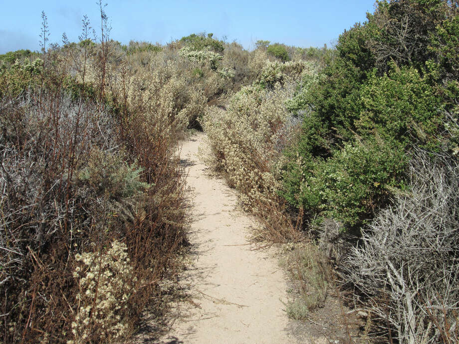 The trail climbs through chaparral (Tom Stienstra/The Chronicle)