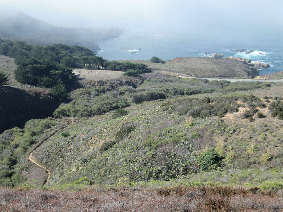 The trail provides a cove view, from where you can often hear the sea lions barking (Tom Stienstra/The Chronicle)