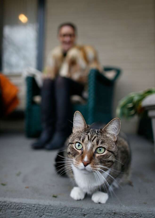 Puddy on a porch: Sarah Sullivan and Agent Briscoe wait for Halloween trick-or-treaters in Brooklyn, N.Y. Agent Briscoe is the one with the deep purr. Photo: Jemal Countess, Getty Images