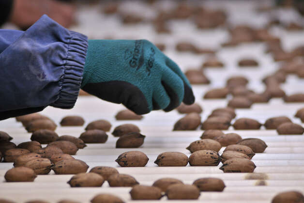 Part of the cleaning process at South Country Pecans is done by hand. Photo: Robin Jerstad/For The Express-Ne