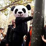Panda costumes and hats were especially popular this year for the Giants World Series Championship parade in San Francisco, Calif., Wednesday, October 31, 2012.
